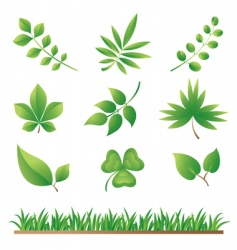 grass and leaves vector image