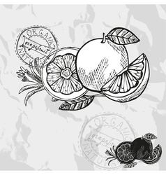 Hand drawn decorative grapefruits vector image