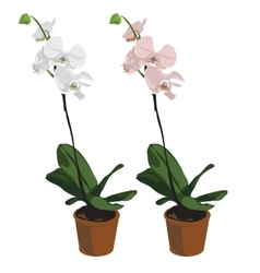 Two orchids in pots flowers isolated vector