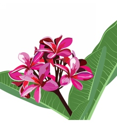Watercolor Pink Tropical flower bouquet card vector image vector image