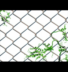 barbed wire with ivy vector image vector image