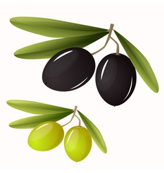 Green and black olives with leaves vector image vector image