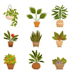 set of home decorative plants vector image