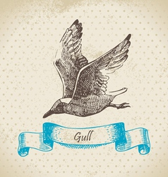 Gull hand drawn vector image vector image