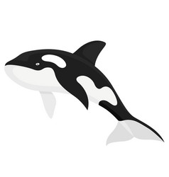killer whale fish vector image