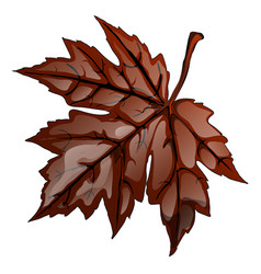 Brown autumn maple leaf isolated on white vector