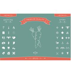 Carrots symbol line icon vector