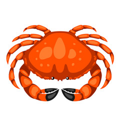 red crab isolated of seafood on vector image
