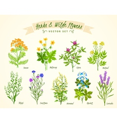 Herbs And Wild Flowers Background Set vector image vector image