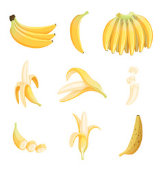 banana cartoon fruits half appetizing dessert vector image