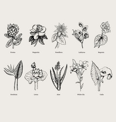 Hand drawn exotic plants set vector
