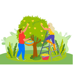 Pear tree people picking fruits in garden farmers vector