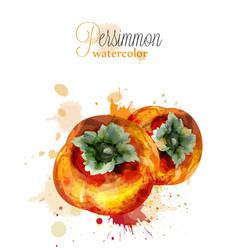 persimmon fruits watercolor delicious vector image