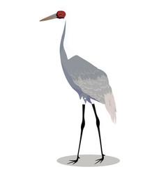 white naped crane cartoon vector image