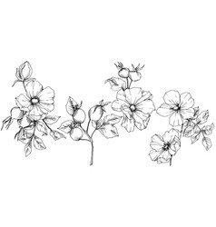 Wildflower rosa canina in a style isolated vector