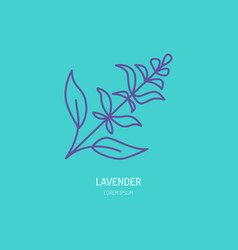 line icon of lavender bunch herbal vector image vector image