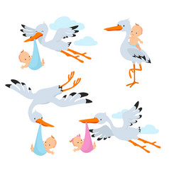 Cartoon flying storks and stork birds carrying vector