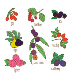 Colored hand drawn botanical food set vector