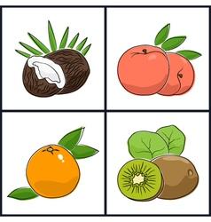 Grapefruit PeachKiwifruit Coconut vector