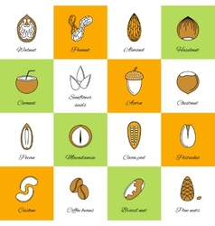 set nuts icons vector image
