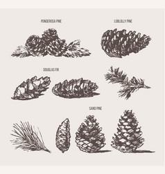 set pine cones design elements drawn sketch vector image vector image