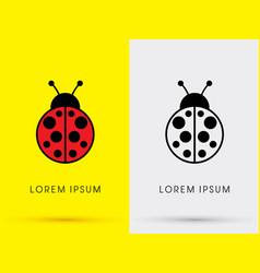 ladybug beetle vector image