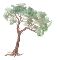 Pine tree on a white background Watercolor Sketch vector