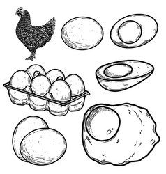 set chicken and eggs in engraving style vector image