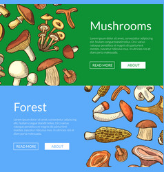 hand drawn mushrooms horizontal banners vector image
