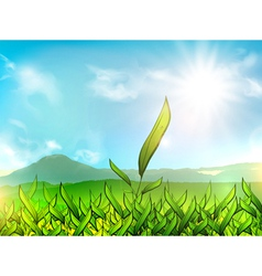 Tea Plantation vector image