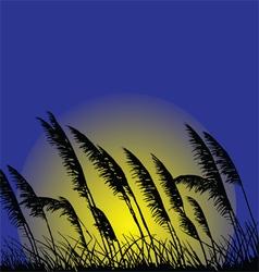 Wild grass vector image