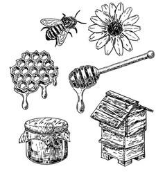 ink hand drawn sketch style honey set vector image vector image