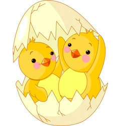 Chickens and egg vector