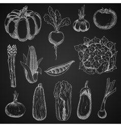 Farm vegetables chalk sketches set vector