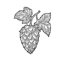 hop beer ingredient sketch vector image