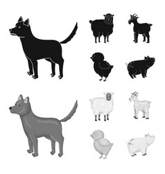 isolated object of breeding and kitchen icon set vector image