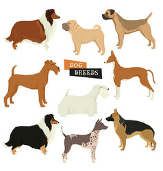 set of 9 dog breeds isolated objects vector image