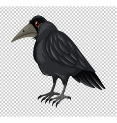 Wild crow on transparent background vector