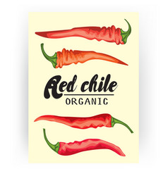 cartoon chile pepper card ripe red vegetable vector image vector image