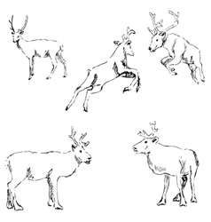 Deer sketch Pencil drawing by hand vector