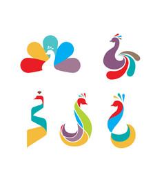 peacock bird logo design vector image