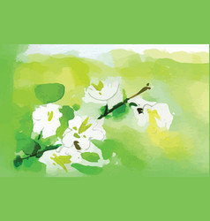 watercolor jasmine flower vector image
