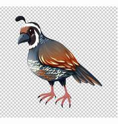 Wild quail on transparent background vector