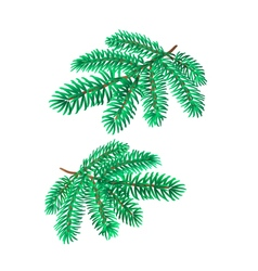 Branches Silver Spruce Christmas tree vector