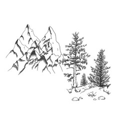 Coniferous tree pine at rock bottom vector