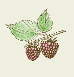 Hand drawn raspberry background retro sketch vector