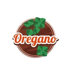 Oregano spice vector