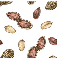seamless pattern with hand drawn peanuts vector image