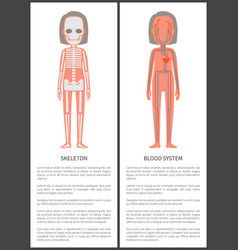 Skeleton and blood system vector