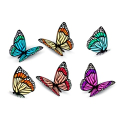 realistic butterflies set vector image vector image